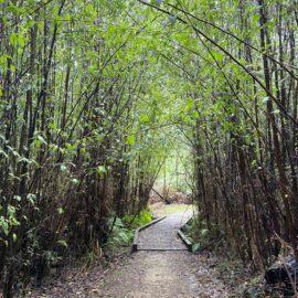 Beauty Spot Nature Trail